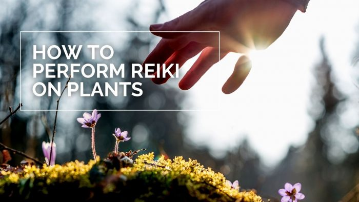How to Perform Reiki on Plants